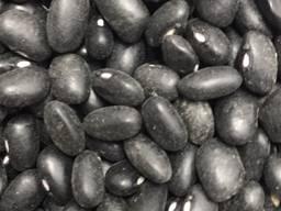 Beans from Ukraine