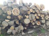 Дрова / Firewood / Brennholz - photo 7