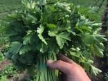 Jeg vil sælge dild / persille (fra Ukraine) - photo 2