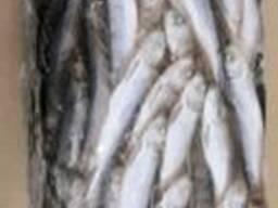 Килька мороженая, салака - фото 4